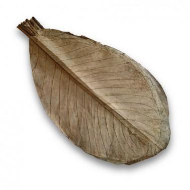 HOOBA Hojas de Magnolio secas 20 uds